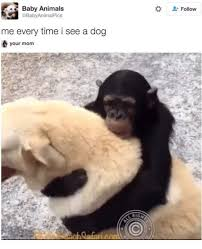 Baby Animal Memes - 25 best memes about baby animal baby animal memes