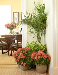 decorate your home with perennial flowers costa farms