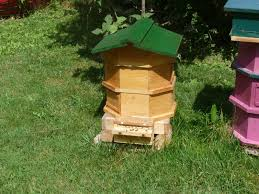 pete u0027s bees a feral hive recovery octagon backyard hives for sale