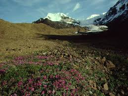 The Interior Plains Climate Interior Plains Regions Canadas Regions