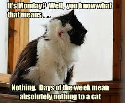 Funny Monday Memes - lolcats monday lol at funny cat memes funny cat pictures