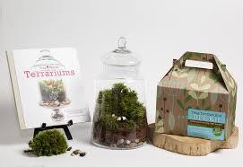 terrarium kit bundle by twig terrarium twig terrariums