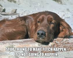 Stop Trying To Make Fetch Happen Meme - stop trying to make fetch happen its not going to happen meme