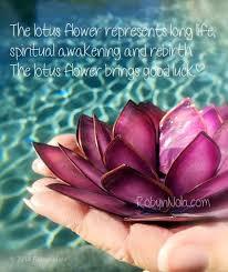 Blue Lotus Flower Meaning - best 25 lotus symbolism ideas on pinterest lotus flower