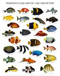 142 best my freshwater fish images on tropical fish