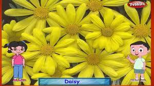 sunflower rhyme flower rhymes for children nursery rhymes for