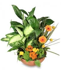 port florist botanical garden plants fresh flowers in new port richey fl
