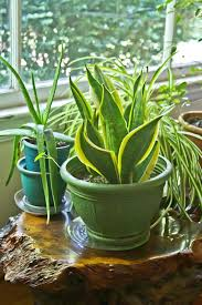 house plants no light indoor house plant plants buy planters no light skipset info