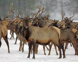 Oregon wildlife images Harsh winter took heavy toll on wildlife across western u s the jpg