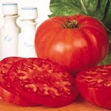 81 best gardening tomatoes images on gardening