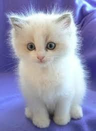 cute baby white cat adorable kitten pics litle pups