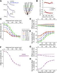 selective silencing of individual dendritic branches by an mglu2