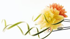 wedding flowers hd beautiful wedding flower wallpaper background and pictures