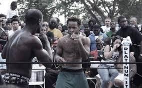 dawg fight u0027 unrated miami herald