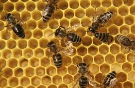 How To Get Rid Of A Beehive In Your Backyard Getting Rid Of Bees Isn U0027t So Hard After All Here U0027s How To Do It