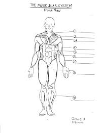 muscular system identification the human body anatomy u0026 physiology