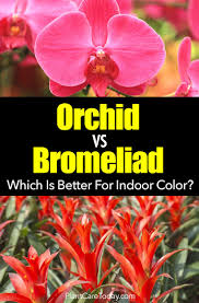 which is better bromeliads or orchids for indoor color