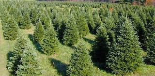 benefits of a real tree hensler nursery inc