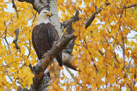 awesomize autumn wildlife shots fall color