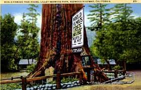 famous tree houses big tree drive thru avenue of the giants california