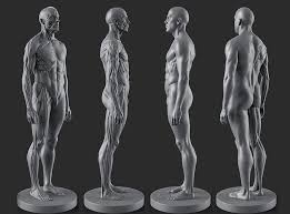 Human Anatomy Reference 468 Best Anatomy References Images On Pinterest Anatomy