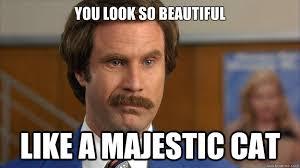 So Beautiful Meme - you look so beautiful like a majestic cat misc quickmeme