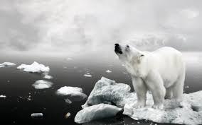 361 polar bear hd wallpapers backgrounds wallpaper abyss