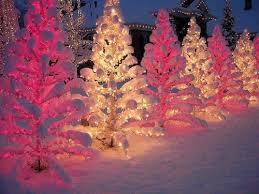 snow winter tree lights cold tree white