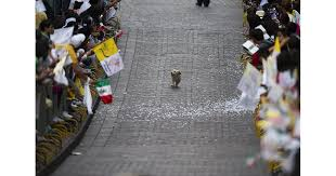 Doge Sex Meme - this dog that thinks the parade is all for him happy photos
