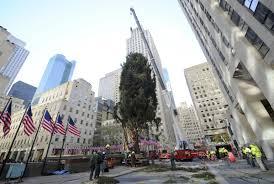 rockefeller center christmas tree arrives in nyc entertainment