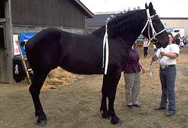 Are Horses Color Blind Rare Horse Colors U2013 The Facts The Equinest