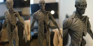 Female Anatomy Figure Anatomy Male And Female Figures Avaible For Buying 3dtotal