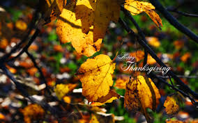 thanksgiving imagenes thanksgiving wallpapers by kate net page 1