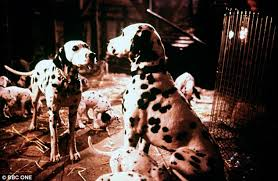 buy dog watching 101 dalmatians daily mail