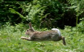 rabbits u2013 celia haddon