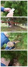 How To Trim A Real Christmas Tree - one crucial way to take christmas to the next level