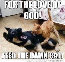 Funny Cat And Dog Memes - 14 hilarious cat dog memes funny stuff pinterest dog memes