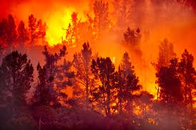 Wildfire Definition by 343x224px Interesting Wildfire Image 55 1449123579