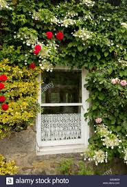 windows flowers climbing wall stock photos u0026 windows flowers