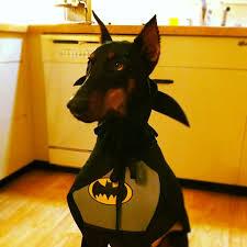 Sullivan Halloween Costume Doberman Toddler Boy Halloween Costume Batman Robin