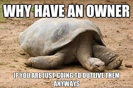 Turtle Memes - depression turtle memes quickmeme