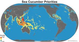 Sea World Map Mapping The World U0027s Sea Cucumber Diversity
