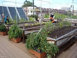 luxury simple vegetable garden planner garden design
