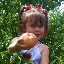 apple annie u0027s pick your own fruit orchards produce farm and