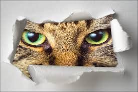 sticker trompe oeil sticker trompe l u0027oeil yeux de chat art déco stickers