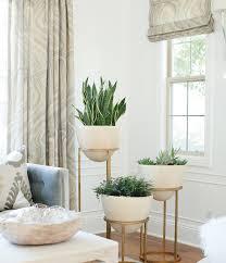 best low light indoor trees 19 best low maintenance houseplants balcony garden web