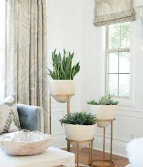 Low Maintenance Plants And Flowers - 19 best low maintenance houseplants balcony garden web