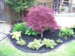 best time to plant shrubs in best time to plant landscaping 4