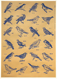 bird wrapping paper dilnot artists books prints boxes and cards