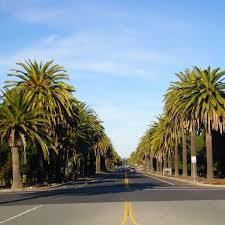 palm trees in san francisco straight dope message board